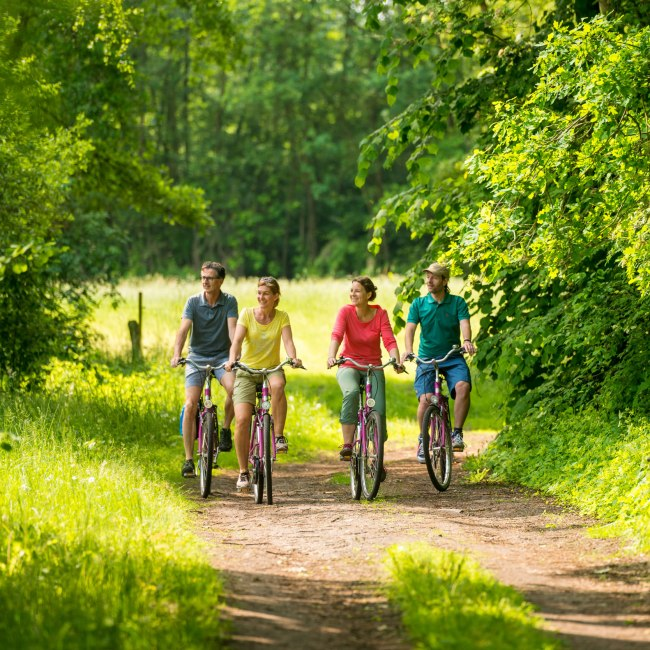 View of four cyclists in the Uelzen heathland region
