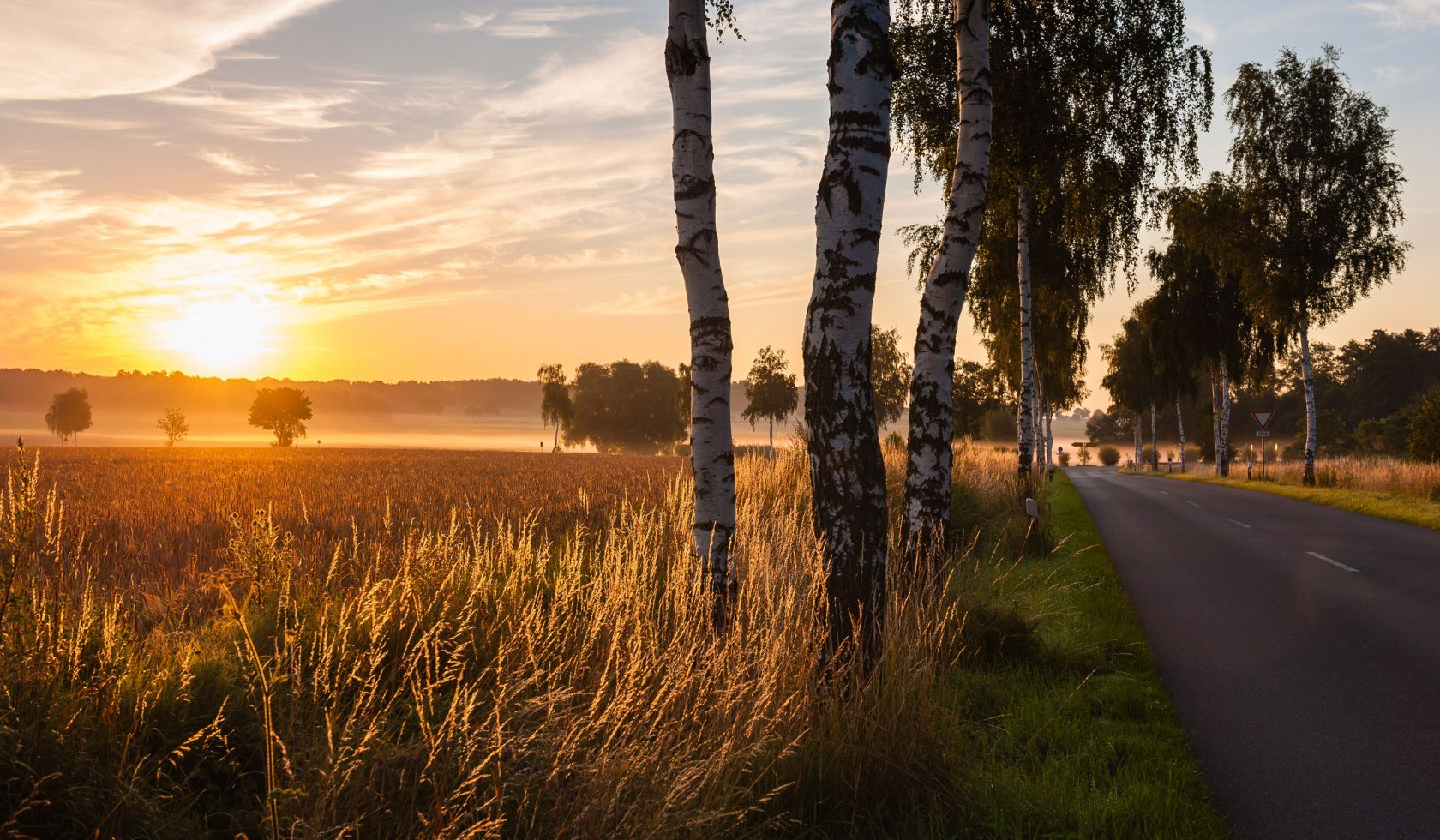 View into a sunset over cereal fields and birch avenue in the Uelzener basin